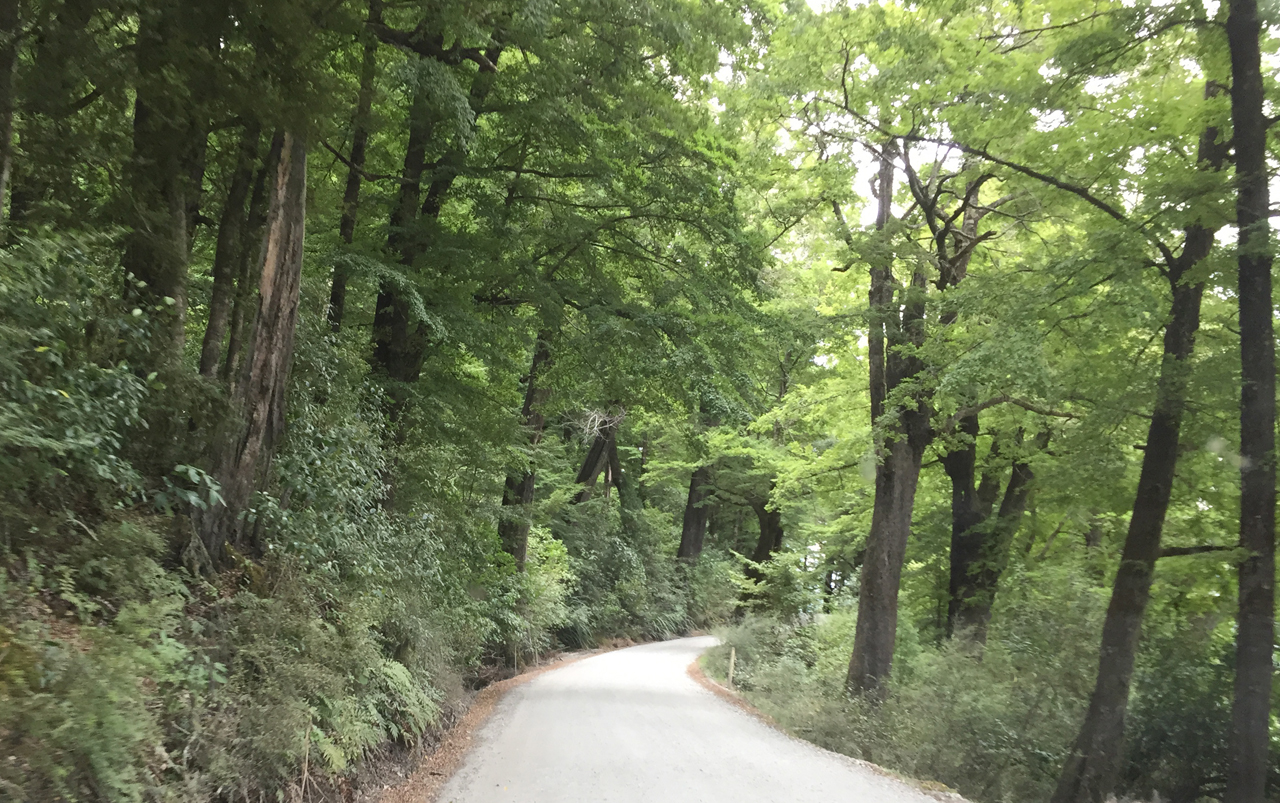 Narrow road surrounded by trees