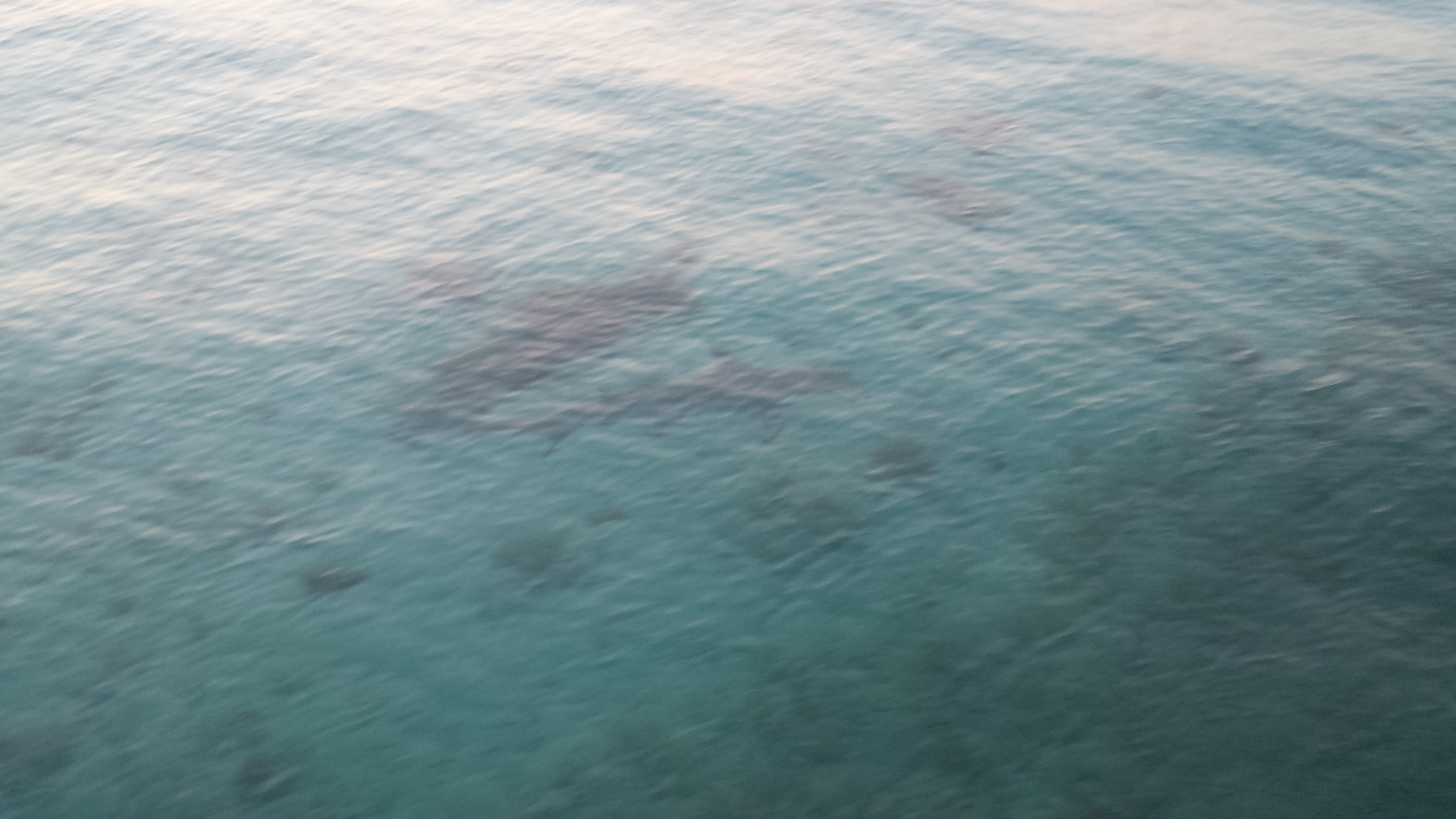 Looking down through the surface of the water as a hammerhead shark swimming through the ocean