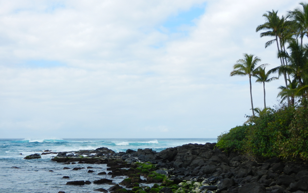 Lava rock coastline with palm trees on the right with ocean water on the left and in the background.