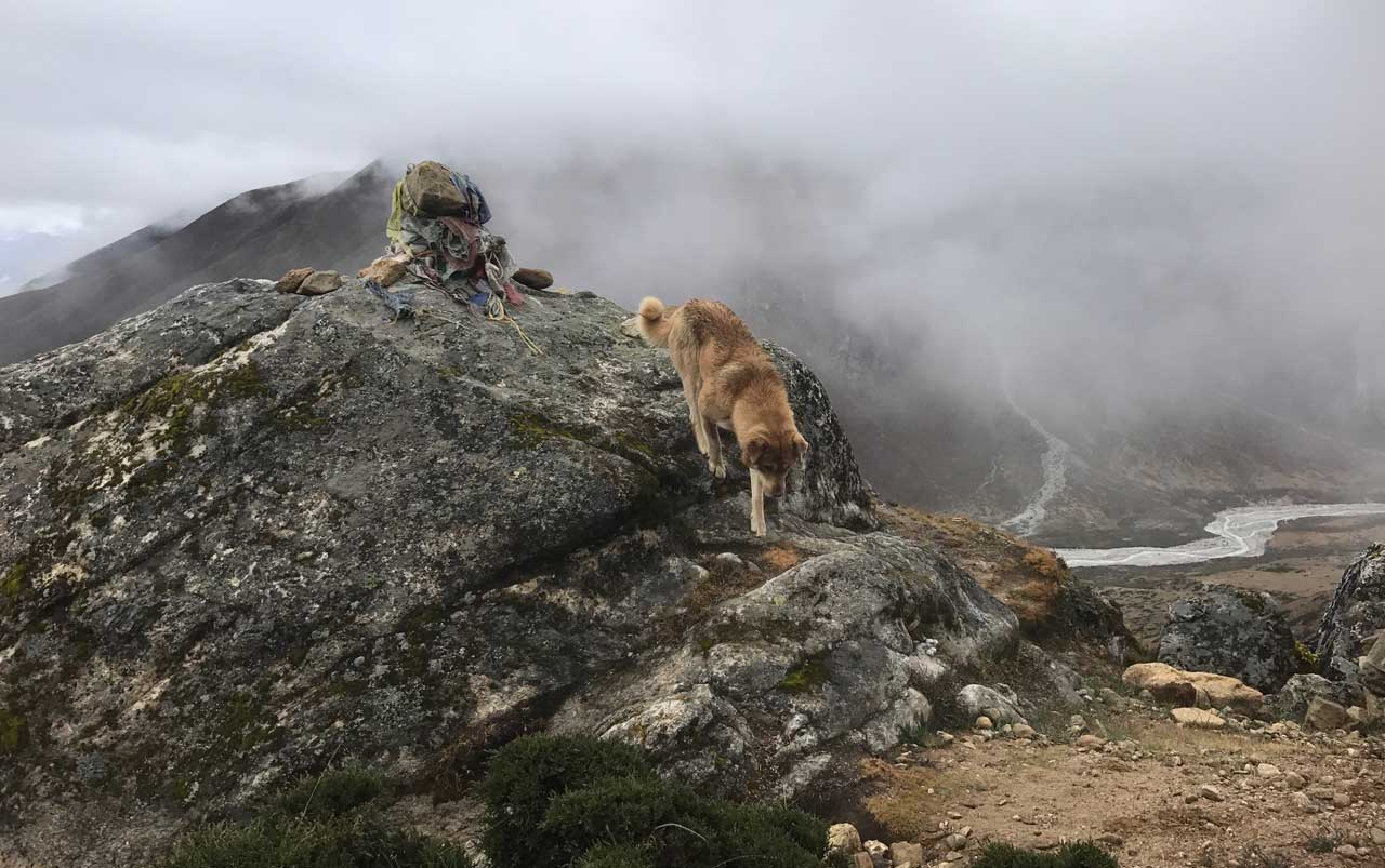 Brown medium sized dog climbing down the front of a large rock with a small rock covered in prayer flags on top.