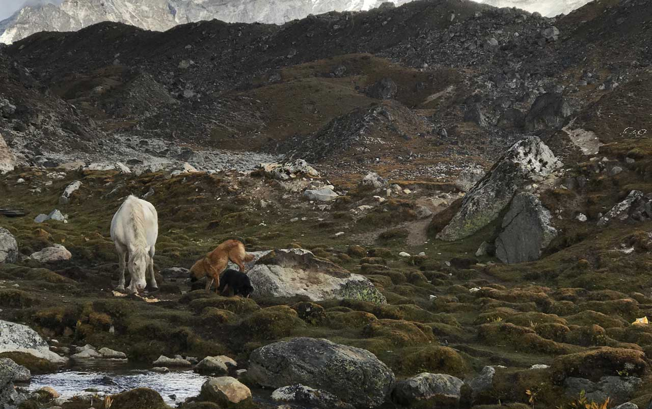 White horse with two dogs near a stream surrounded by rocks with mountains in the background.
